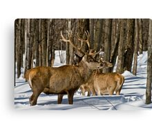 Red Deers In Winter Canvas Print