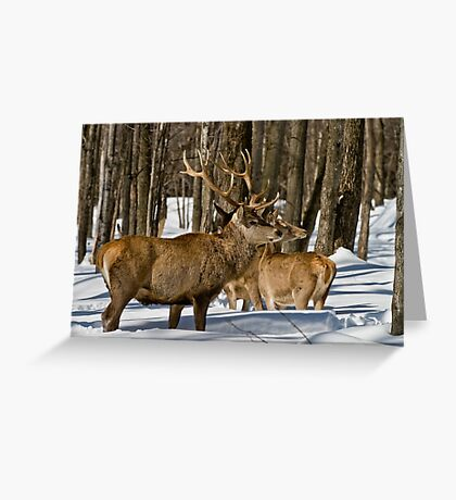 Red Deers In Winter Greeting Card