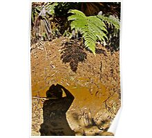 NATURAL HISTORY ~ A SHADOW OF ITS FORMER SELF! Poster