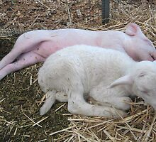 And the piglet shall lay down with the lamb... by Darren Stein