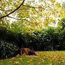 The Sleeping Shepherd! by Gabrielle  Lees