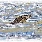 BORNEO RIVER DRAGON by NICK COBURN PHILLIPS