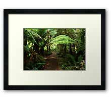 Into the Rain Forest Framed Print
