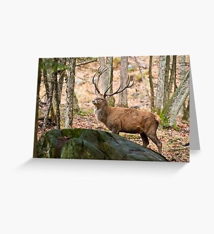 Red Deer Bull Greeting Card
