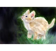 Cute Kitten Oil Painting Photographic Print