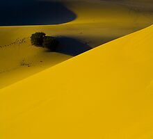"""I left my 'HEART' in Death Valley"" Couple of Trees by franciscokh"