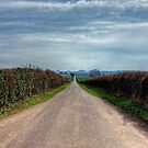 The Long Walk, near Winchester by NeilAlderney