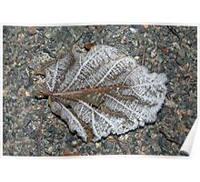 Frosen leaf Poster