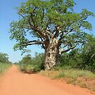 Kimberley Giant by Liz Worth