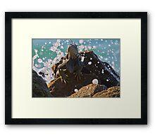 Iguana Lizard - Aruba, Caribbean Framed Print