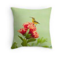Little Sweety - yellow bellied sunbird Throw Pillow