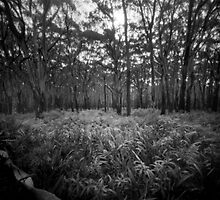 Mt Donna Buang I by Andrew Bradsworth