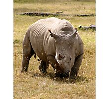 White Rhino, Lake Nakuru, Kenya Photographic Print