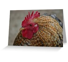 My Rooster  Greeting Card