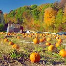 Pumpkin Patch by Alberto  DeJesus
