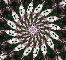 Purple and White Daisies Kaleidoscope 2 by Christopher Johnson