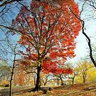 Red Autumn Tree by Alberto  DeJesus