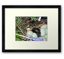 Easter chick Framed Print