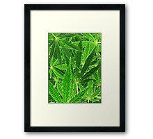 hemp leaf collage Framed Print