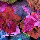 Hibiscuses. by Vitta