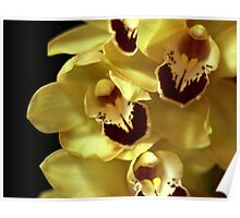 Easter Orchid Poster