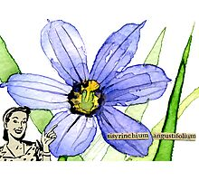 Sisyrinchium angustifolium (Pointed Blue-Eyed Grass) Photographic Print