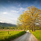 Hyatt Lane in Cade's Cove - Smoky Mountains by Dave Allen