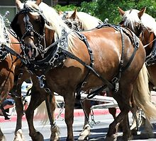 Pulling Together ~ Horses Hitched to a Wagon by Jan  Tribe