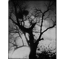In The Black Forest Photographic Print