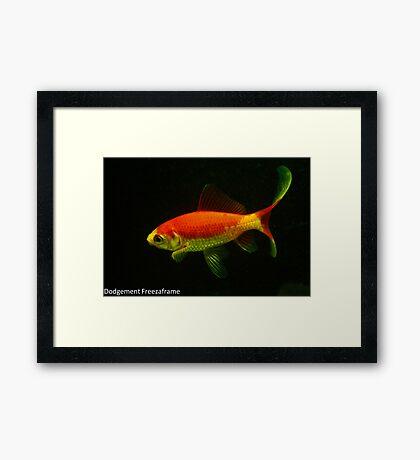 My Goldfish Jaws. Framed Print