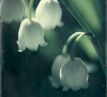 Lily of the valley  by nefetiti