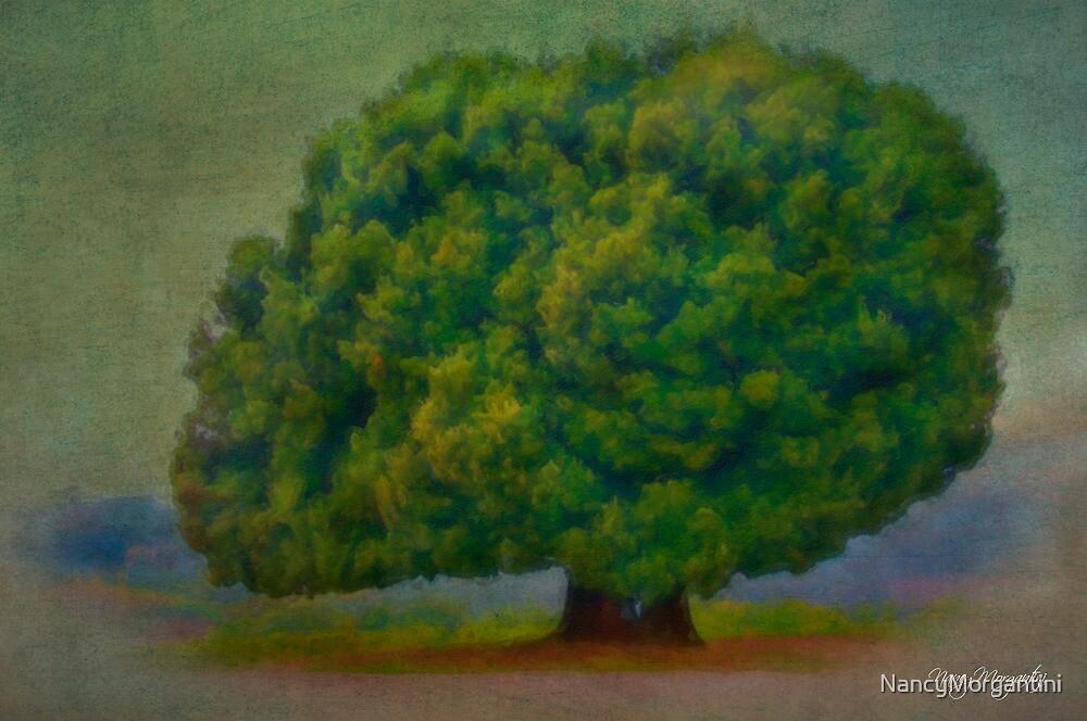 Tuscan Tree by NancyMorgantini