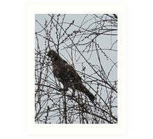 Partridge in a Pussywillow Tree Art Print