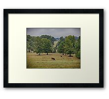 Cows in a Field Framed Print