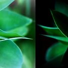 Day & Night by Maureen Grobler