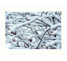 Snowy, snowy berries Art Print