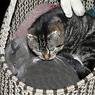 Kittys In A Basket by MaeBelle
