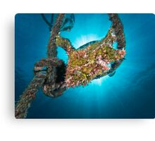The Frogfish in the rope Canvas Print