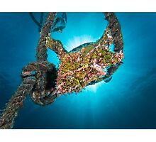 The Frogfish in the rope Photographic Print