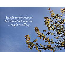 Haiku Branches Photographic Print