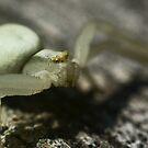 Macro Spider 1 by Sam Mortimer