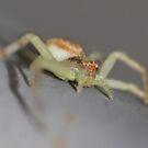 little green spider sat down beside her by katpartridge