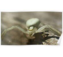 Macro Spider 2 Poster