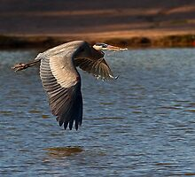 0316111 Great Blue Heron by Marvin Collins