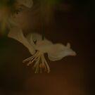 dreamy blossom by 8daab