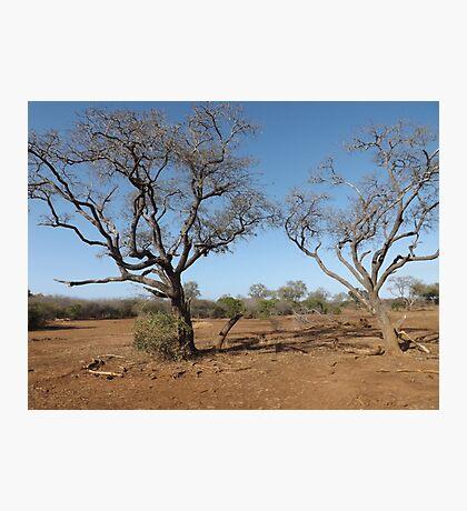 African Landscape Photographic Print