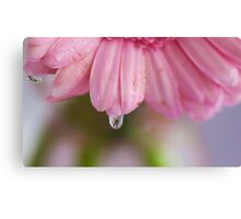 Flower in a Raindrop Canvas Print