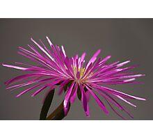 Flower 4877 Photographic Print