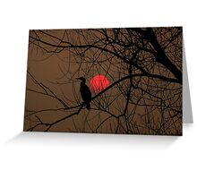 cormorant at sunset Greeting Card