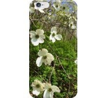 Nature Beauty iPhone Case/Skin